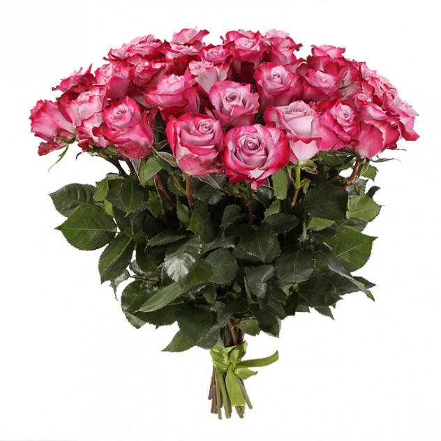 49 роз Ди пурпл